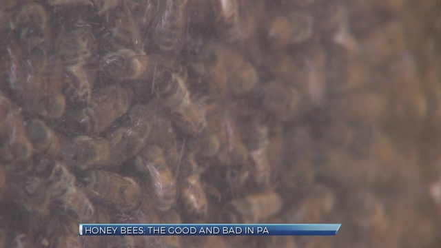 At Farm Show, beekeepers weigh hope, doubt about honey bee decline