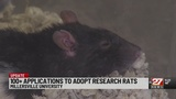 Over 100 apply for rat adoption